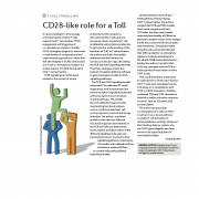 CD28-like role for a Toll