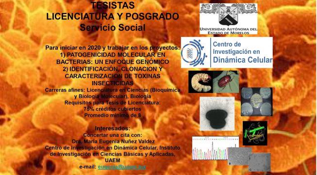 Reclutamiento estudiantes Dra. Nuñez_page-0001